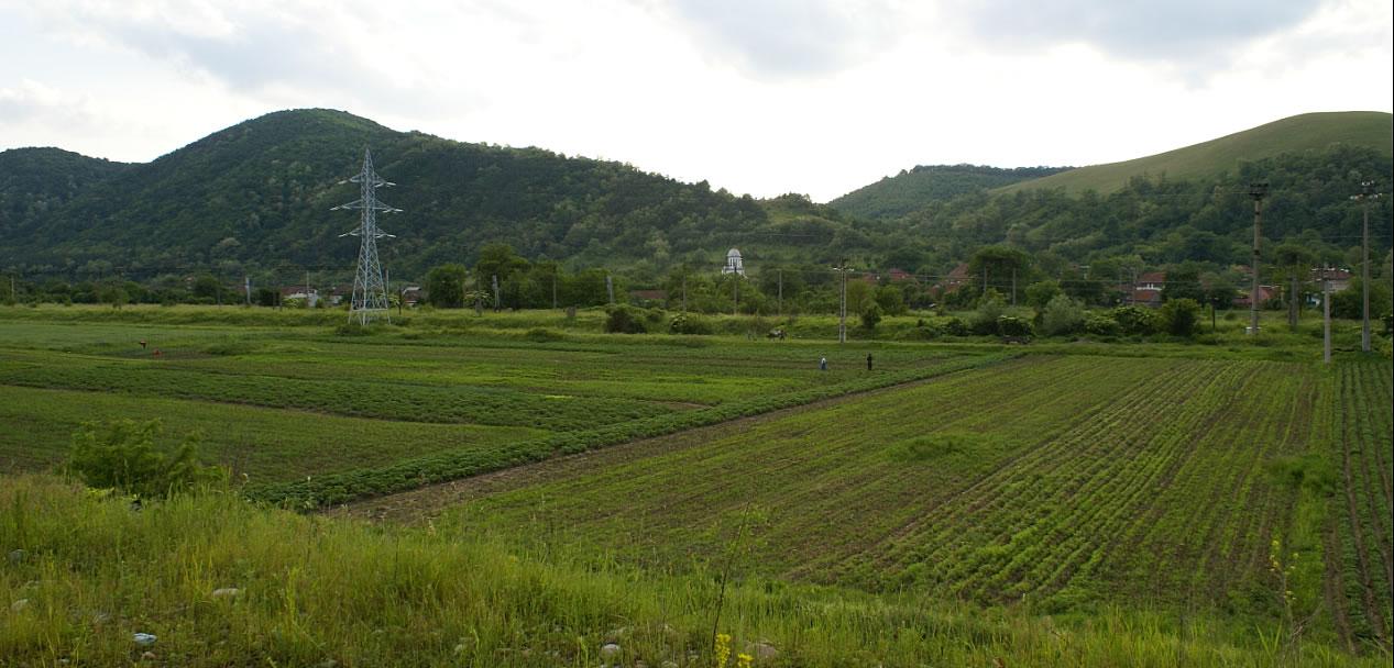 agricultura_subcetate